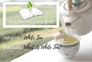 Tea Knowledge | What Is White Tea?