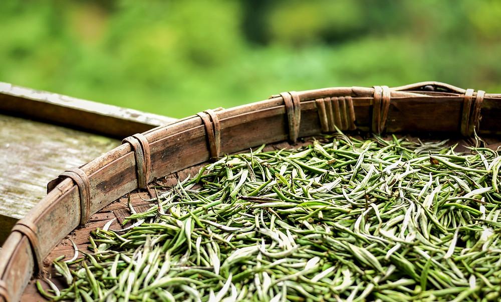 Loose-leaf white tea in a basket