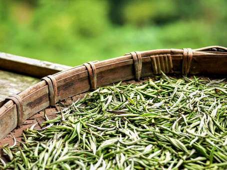 How To Identify Quality White Tea & What It Should Cost