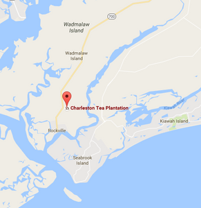Charleston Tea Plantation | Charleston, SC