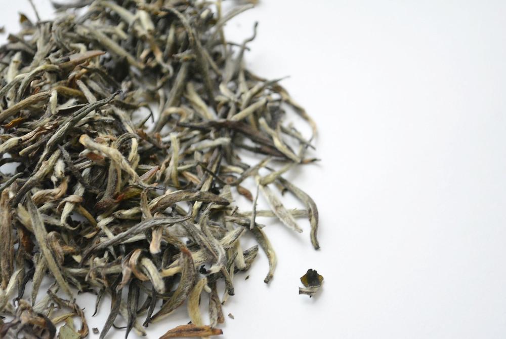 Tea Knowledge | Types of White Tea: Silver Needle