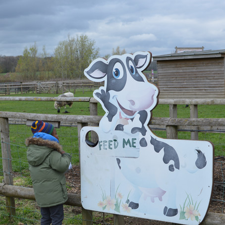 Outdoor Indoor Fun At Willows Activity Farm