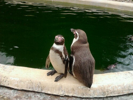Year 8 Trip to Twycross Zoo
