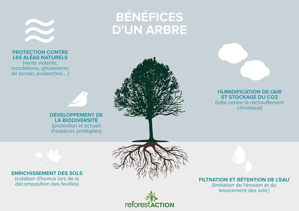 Bénéfices d'un arbre copie.jpg