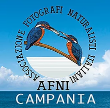 logo afni instagram 2.webp