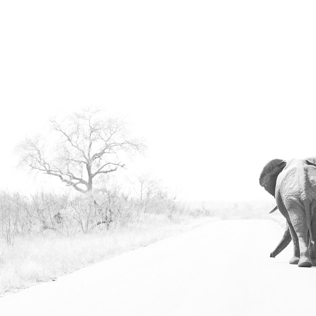 elefanteafni.jpg
