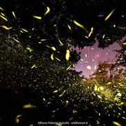 6_Esplosione di Lucciole.jpg