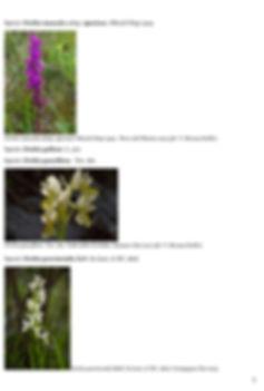 Orchidee-spontanee-_-chi-sono-e-come-fot