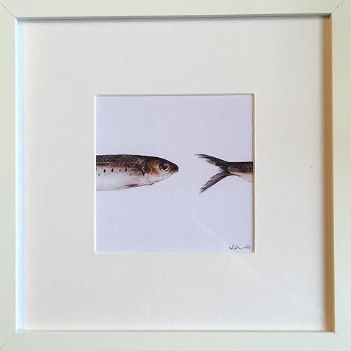 box fish print