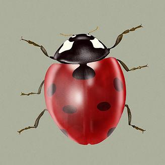 Ladybird with background.jpg