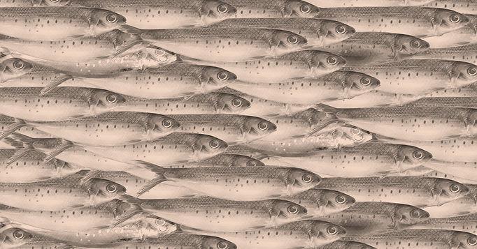 Fish%20collage%20-%20turquiose%20-%20Sar