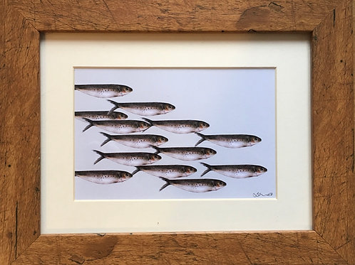 fish print - 13 sardines