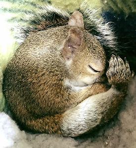 squirr.jpg