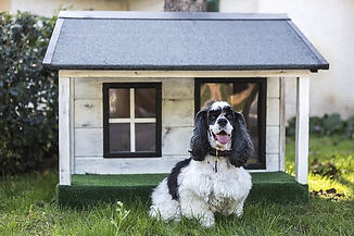 how to crate train a dog sitting outside his kennel