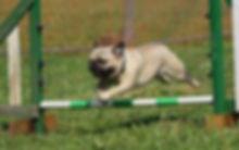 dog-2105686_640 (1).jpg