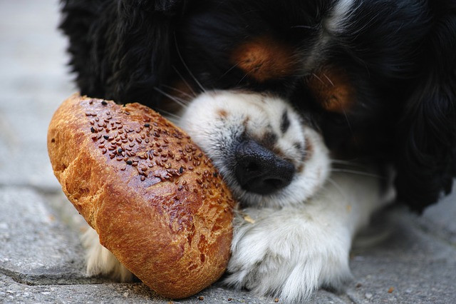 Learn all about dog food while a pet is feeding on human food.