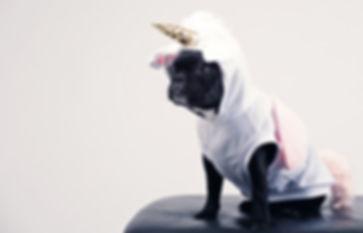 boston-terrier-wearing-unicorn-pet-costu