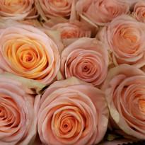 Floral 6.jpg