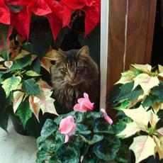 Cat-Christmas.jpg