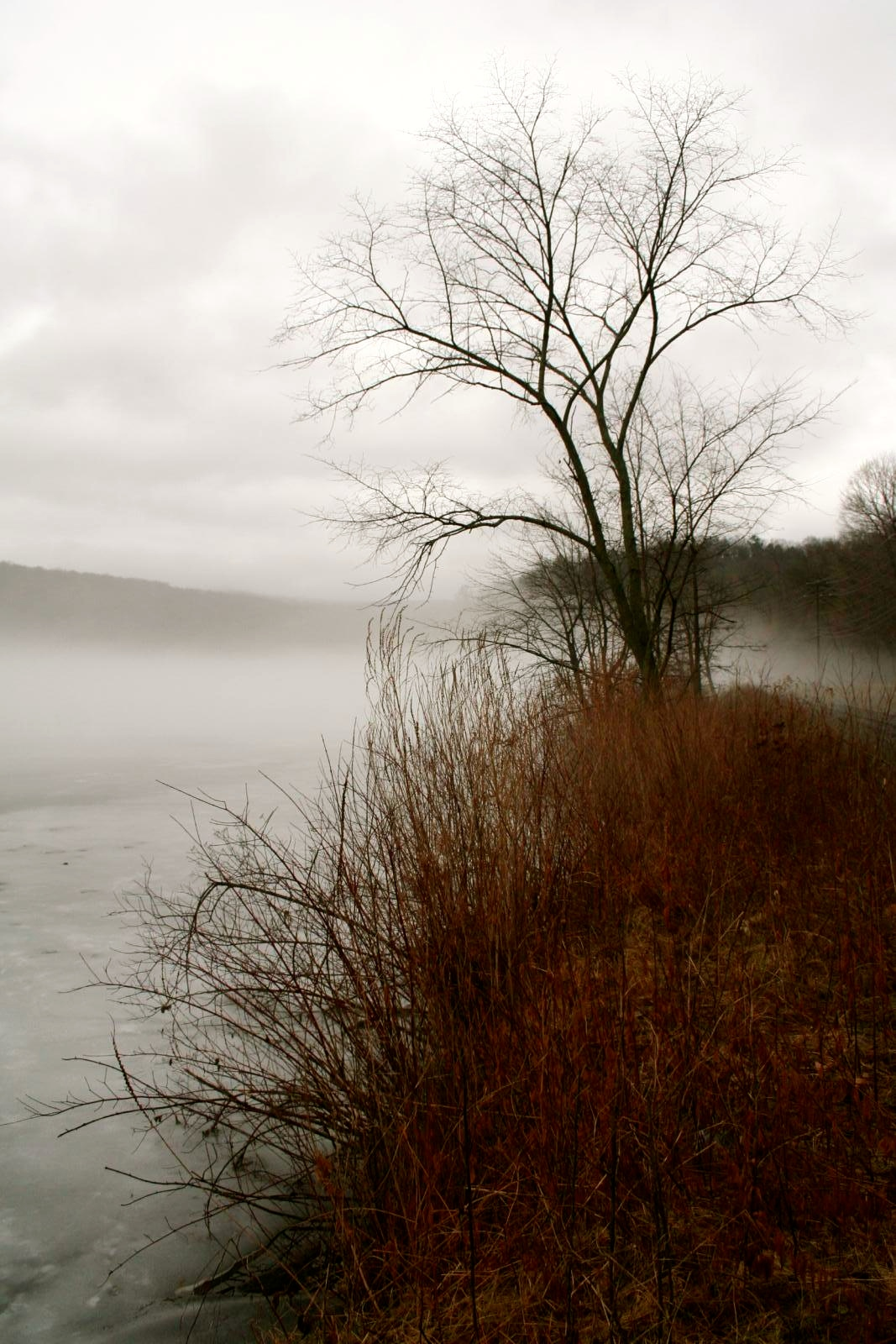 Fog on Hatch Pond