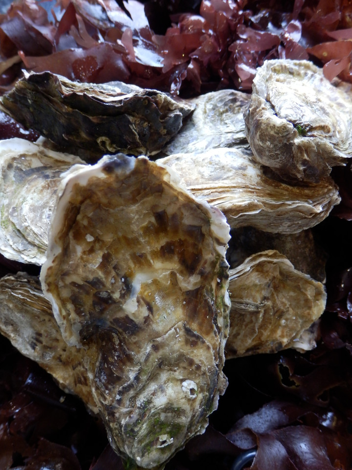 Mull Oysters