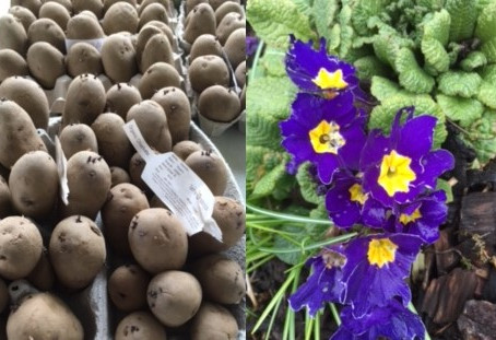 March 2021 - Happenings from the Edible Croft…