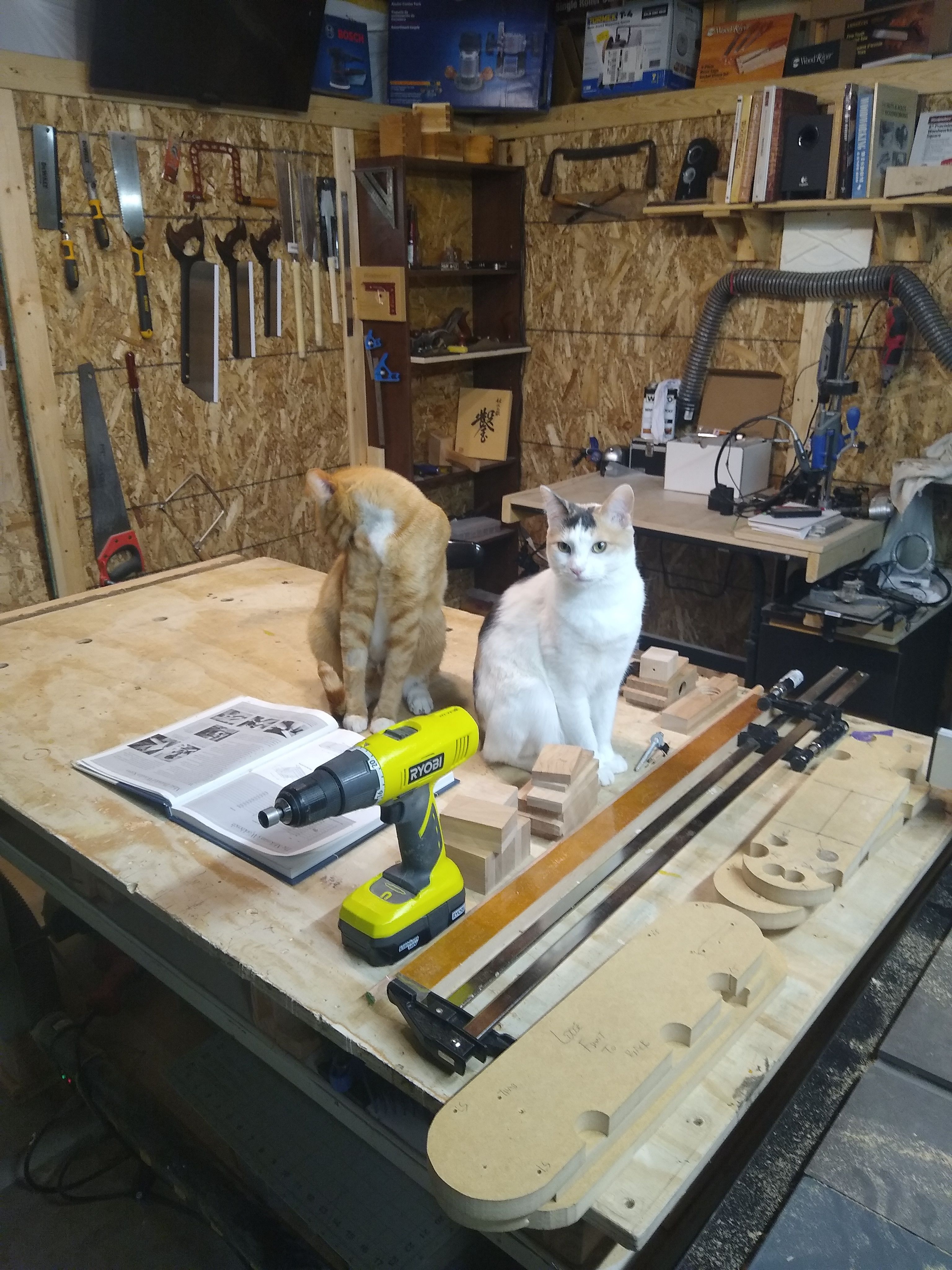 these two want a job in the shop...
