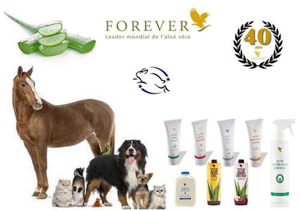 forever animal.jpg