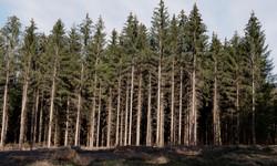 001 Bilck auf Bäume web