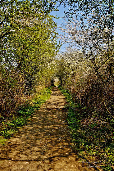 SP124 Herstmonceux Castle Ramblers Path