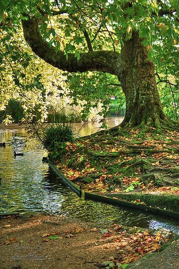 240B4 Autumn in Hampden Park