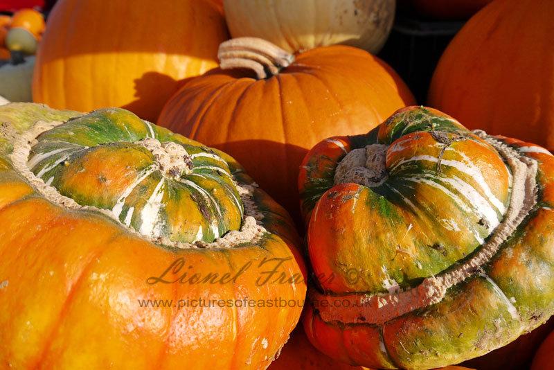 625A4 Close up shot of lots of pumpkins