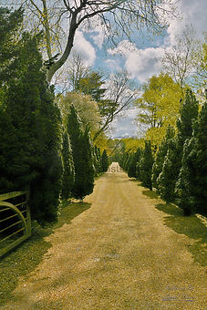 121-Driveway-of-Trees.jpg