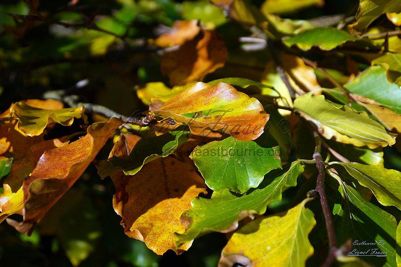 247A3 Autumn Colours