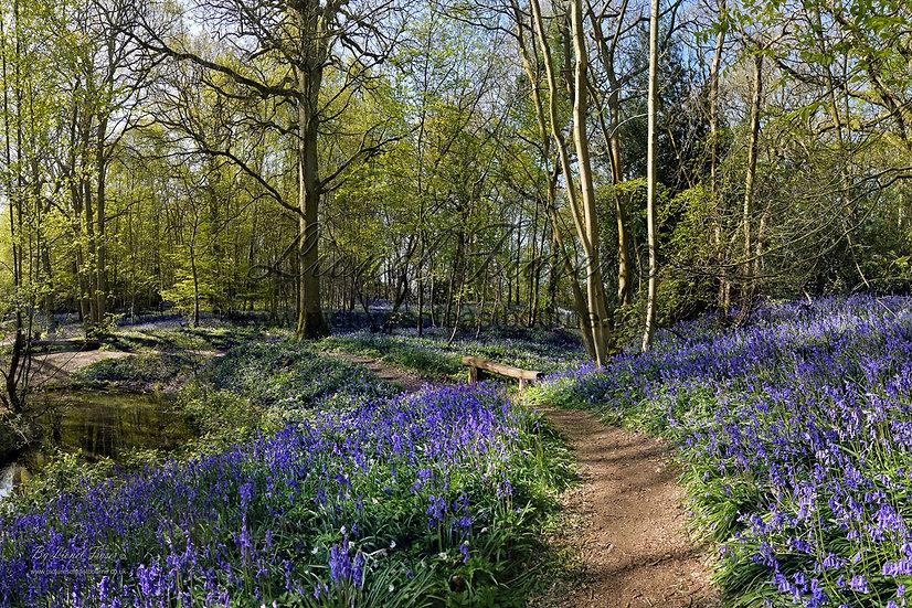 215A3 Bluebell Walk