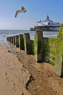 103A3-Flying-Seagull-Eastbourne-Pier-Gro
