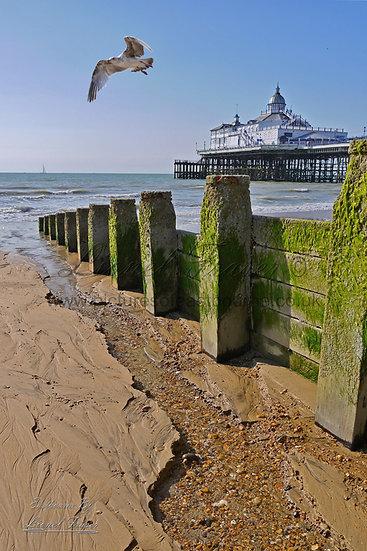 103A3 Seagull Pier Beach Groynes