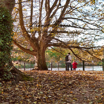 240A6 Autumn in Hampden Park