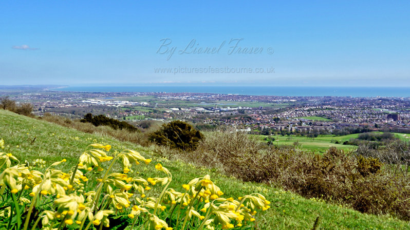 163A1 View Over Eastbourne Town from Butts Brow