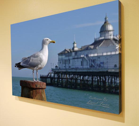S107A2 Seagull on Beach Groyne