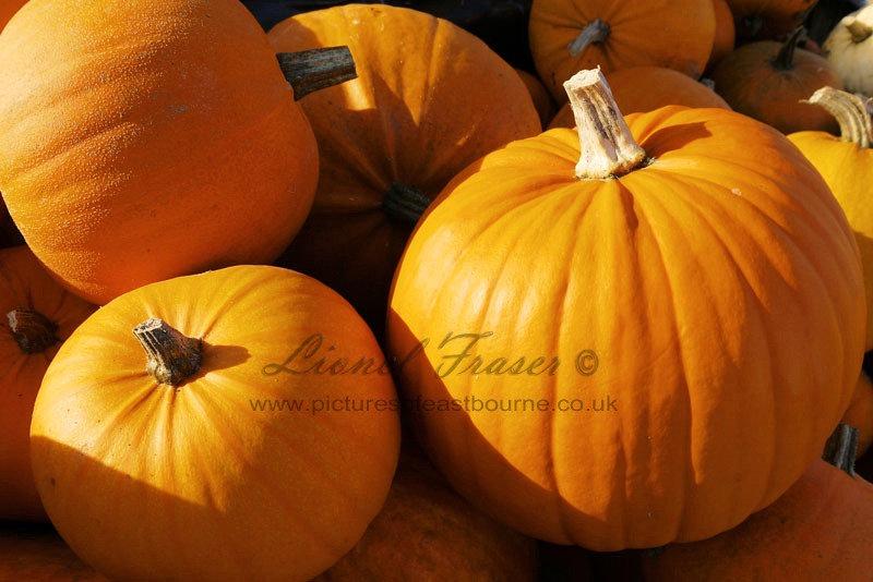 625A5 Close up shot of lots of pumpkins