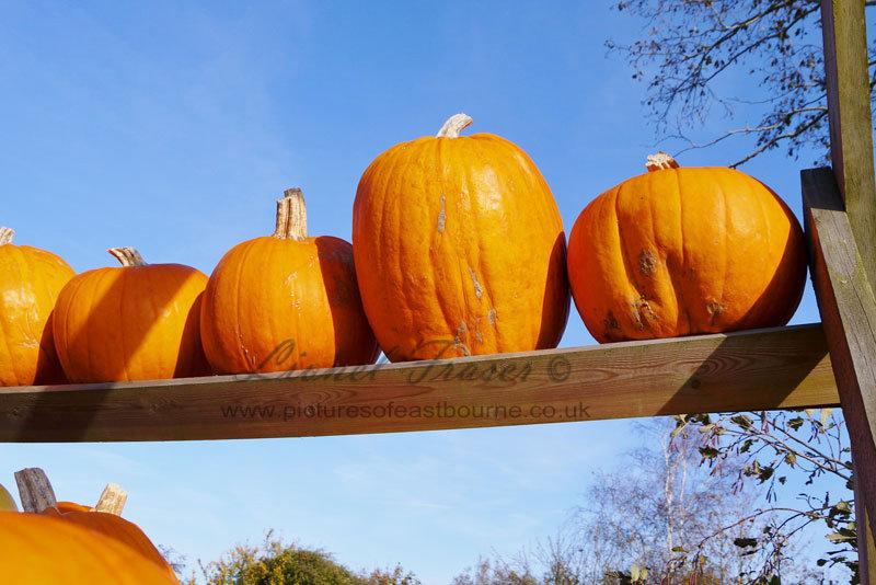 625A3 Pumpkins on a shelf