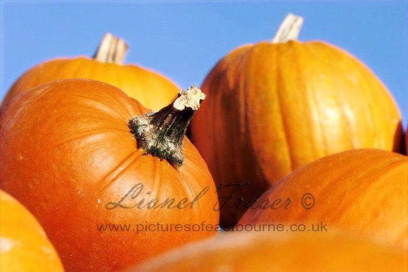 625A1 Close up shot of lots of pumpkins