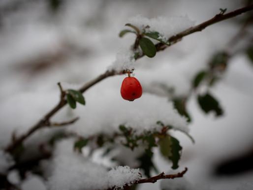 Fotoboekje: Winter Wonderland