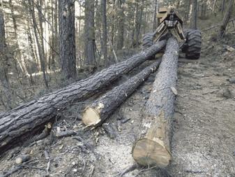 BTMC-Forest-Logs