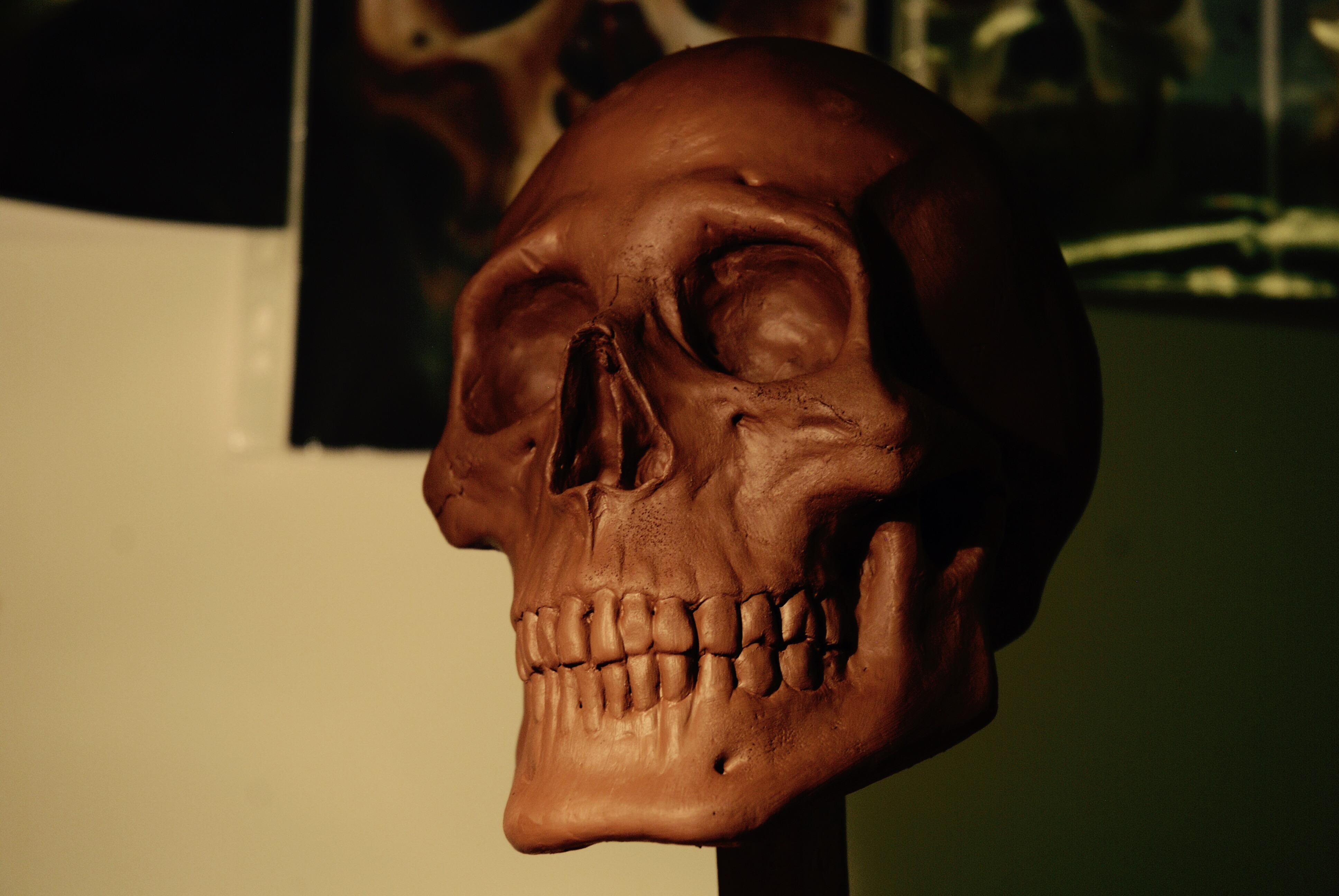 Human Skull replica in teracotta