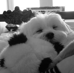 Let sleeping pups sleep.