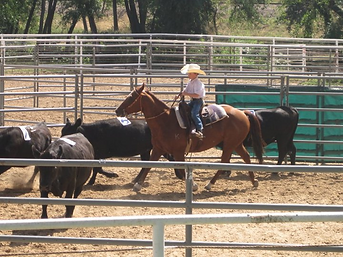 Thar Ranch Productions Thar's Ranch Sorting