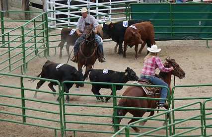 Thar Ranch Productions Thar's Ranch Sorting