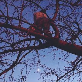 alberoportfoll.jpg